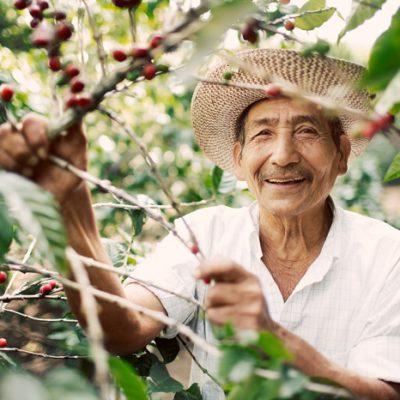 El-Salvador Menendez-harvesting