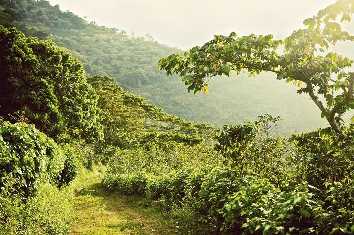 El-Salvador-Menendez-plantation
