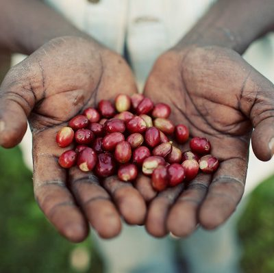 Ethiopia-Gedeo-beans