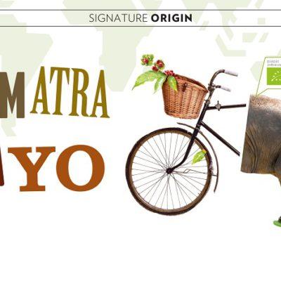 Sumatra-Gayo-coffee-beans