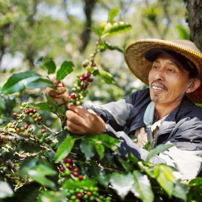 Sumatra-Gayo-people