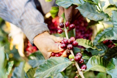 The-5th-Estate-Organic-berries
