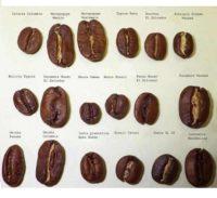 Kohvisordid